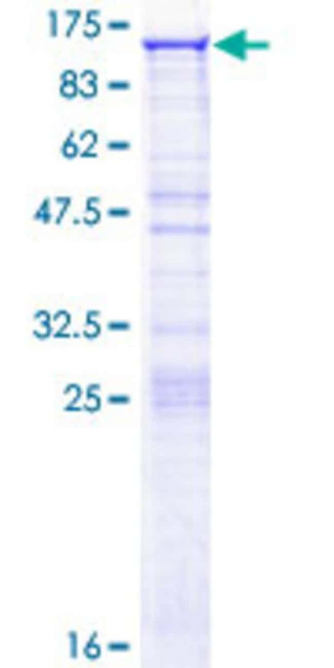 Abnova™Human DDX50 Full-length ORF (NP_076950.1, 1 a.a. - 737 a.a.) Recombinant Protein with GST-tag at N-terminal 25μg Abnova™Human DDX50 Full-length ORF (NP_076950.1, 1 a.a. - 737 a.a.) Recombinant Protein with GST-tag at N-terminal