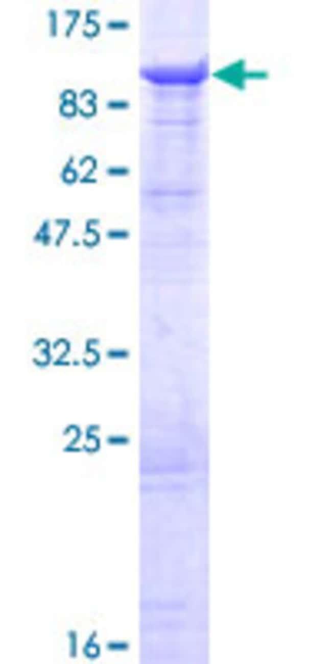 Abnova Human DHX58 Full-length ORF (AAH14949.1, 1 a.a. - 678 a.a.) Recombinant