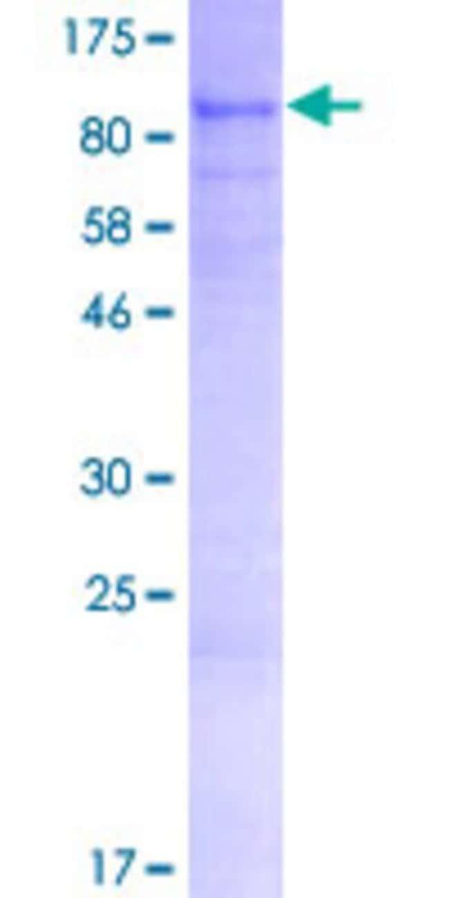 AbnovaHuman ARHGAP28 Full-length ORF (AAH65274.1, 1 a.a. - 545 a.a.) Recombinant