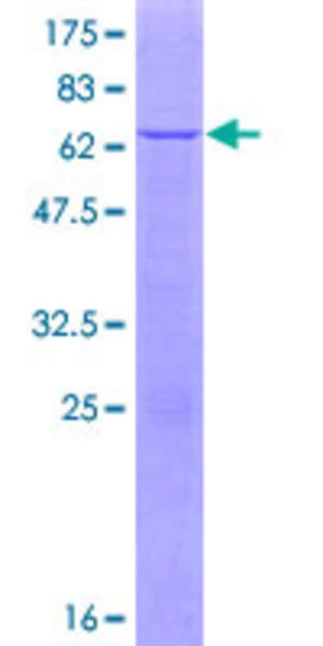 AbnovaHuman APOL6 Full-length ORF (NP_085144.1, 1 a.a. - 343 a.a.) Recombinant