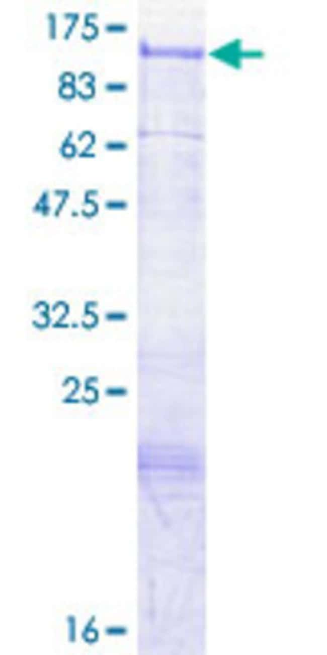 Abnova™Human SGIP1 Full-length ORF (AAH40516.1, 1 a.a. - 859 a.a.) Recombinant Protein with GST-tag at N-terminal 10μg Abnova™Human SGIP1 Full-length ORF (AAH40516.1, 1 a.a. - 859 a.a.) Recombinant Protein with GST-tag at N-terminal
