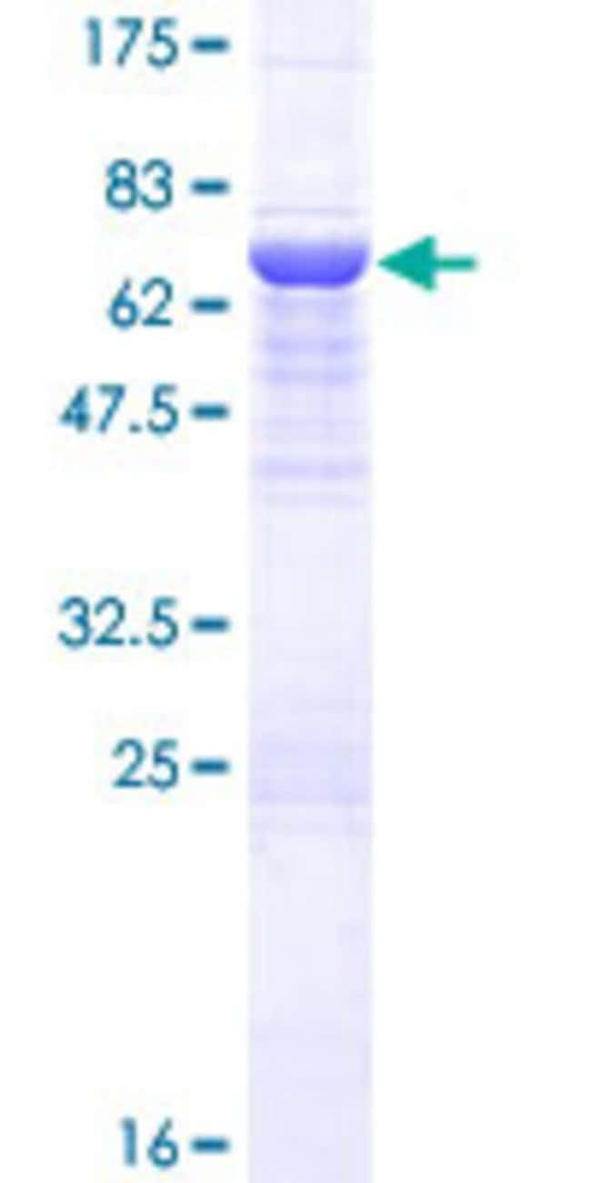 Abnova Human HPS3 Full-length ORF (AAH16901.1, 1 a.a. - 372 a.a.) Recombinant