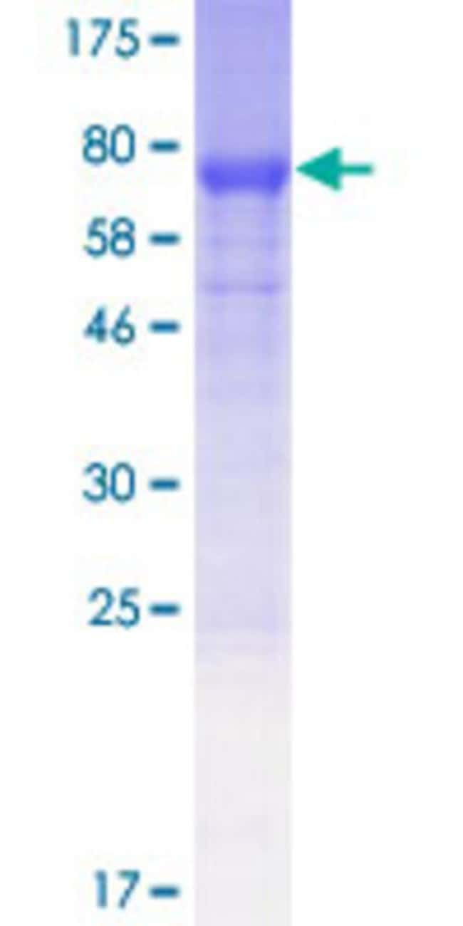 Abnova™Human NUDCD1 Full-length ORF (AAH31258.1, 1 a.a. - 496 a.a.) Recombinant Protein with GST-tag at N-terminal 10μg Abnova™Human NUDCD1 Full-length ORF (AAH31258.1, 1 a.a. - 496 a.a.) Recombinant Protein with GST-tag at N-terminal
