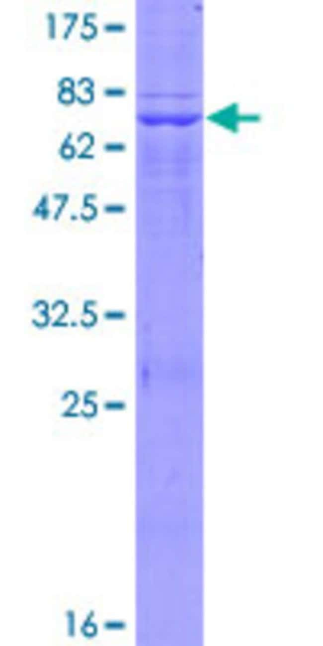 Abnova Human LDHAL6B Full-length ORF (AAH22034.1, 1 a.a. - 381 a.a.) Recombinant
