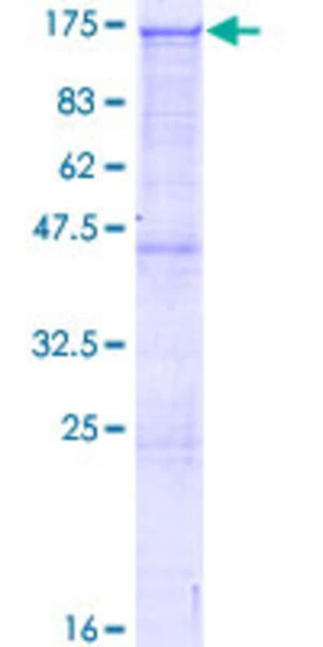 AbnovaHuman ARHGAP12 Full-length ORF (AAH94719.1, 1 a.a. - 841 a.a.) Recombinant