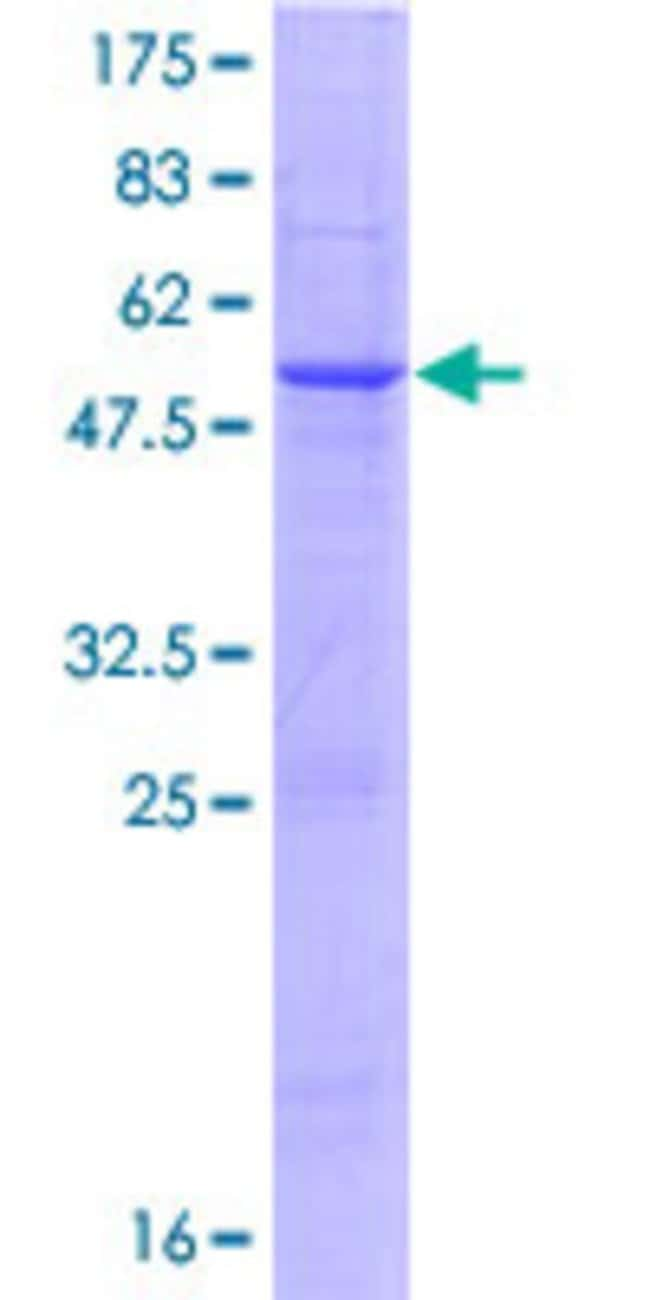 Abnova™Human SLAMF6 Full-length ORF (AAH90928.1, 1 a.a. - 271 a.a.) Recombinant Protein with GST-tag at N-terminal 10μg Abnova™Human SLAMF6 Full-length ORF (AAH90928.1, 1 a.a. - 271 a.a.) Recombinant Protein with GST-tag at N-terminal
