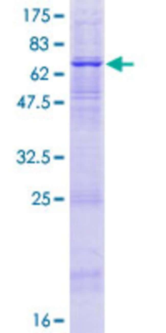 Abnova™Human APOBEC3D Full-length ORF (ENSP00000216099, 1 a.a. - 386 a.a.) Recombinant Protein with GST-tag at N-terminal 10μg Abnova™Human APOBEC3D Full-length ORF (ENSP00000216099, 1 a.a. - 386 a.a.) Recombinant Protein with GST-tag at N-terminal
