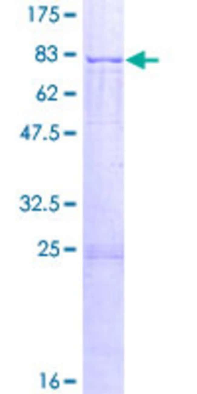 AbnovaHuman APCDD1 Full-length ORF (NP_694545.1, 1 a.a. - 514 a.a.) Recombinant