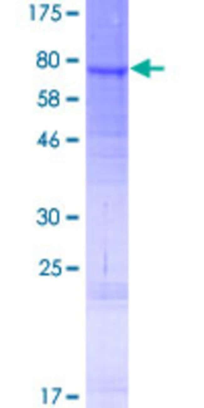 Abnova Human LIPI Full-length ORF (AAI48692.1, 1 a.a. - 481 a.a.) Recombinant