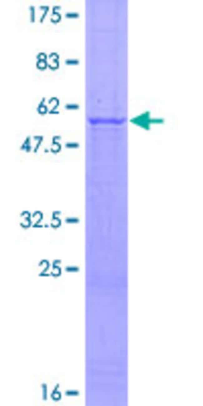 Abnova Human IL27 Full-length ORF (AAH62422.1, 1 a.a. - 243 a.a.) Recombinant