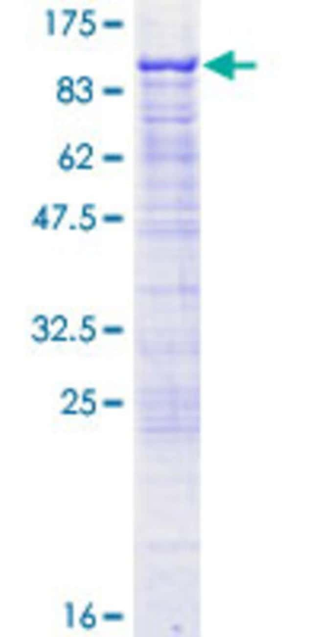 Abnova™ Human GAS2L3 Full-length ORF (NP_777602.1, 1 a.a. - 694 a.a.) Recombinant Protein with GST-tag at N-terminal 10μg Abnova™ Human GAS2L3 Full-length ORF (NP_777602.1, 1 a.a. - 694 a.a.) Recombinant Protein with GST-tag at N-terminal