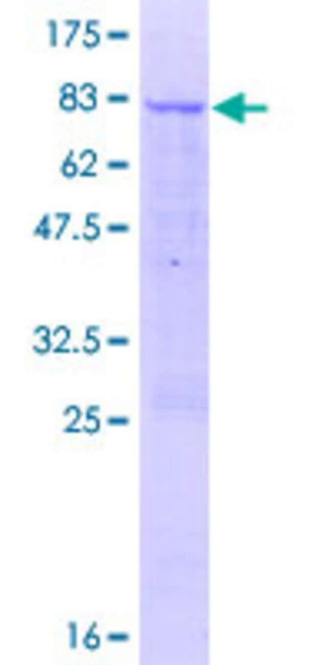 Abnova™Human C12orf40 Full-length ORF (AAH38754.2, 1 a.a. - 422 a.a.) Recombinant Protein with GST-tag at N-terminal 25μg Abnova™Human C12orf40 Full-length ORF (AAH38754.2, 1 a.a. - 422 a.a.) Recombinant Protein with GST-tag at N-terminal