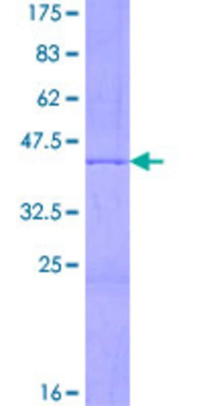 Abnova Human HIST2H3A Full-length ORF (NP_001005464.1, 1 a.a. - 136 a.a.)