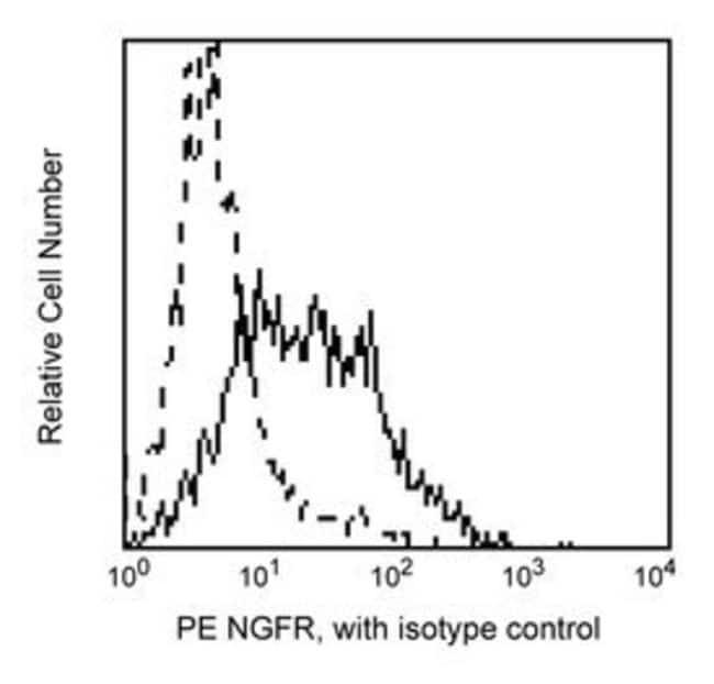 CD271 Mouse anti-Human, PE, Clone: C40-1457, BD 100 Tests; PE CD271 Mouse anti-Human, PE, Clone: C40-1457, BD