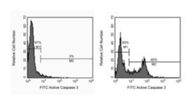 BD Caspase-3, Active Form, mAb Apoptosis Kit : FITC (CPP32) 1 kit:Life