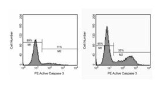 BD Caspase-3, Active Form, mAb Apoptosis Kit 1 kit:Life Sciences