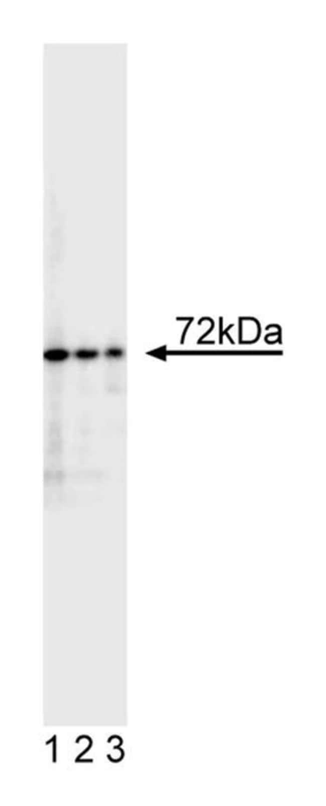 c-IAP-2 w/contol Mouse anti-Human, Unlabeled, Clone: F30-2285, BD 150μg; Unlabeled c-IAP-2 w/contol Mouse anti-Human, Unlabeled, Clone: F30-2285, BD