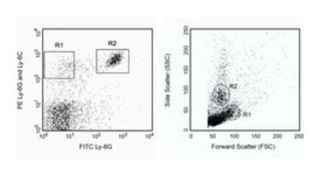 Ly-6G and Ly-6C Rat anti-Mouse, PE, Clone: RB6-8C5, BD 25μg; PE Ly-6G and Ly-6C Rat anti-Mouse, PE, Clone: RB6-8C5, BD