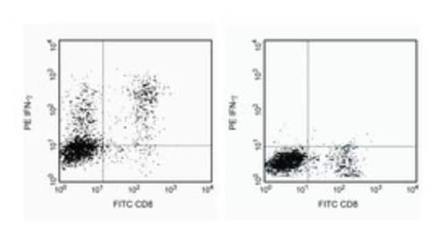 IFN-γ Rat anti-Mouse, PE, Clone: XMG1.2, BD 25μg; PE IFN-γ Rat anti-Mouse, PE, Clone: XMG1.2, BD