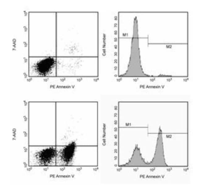 BD Annexin V: PE Apoptosis Detection Kit I 1 kit:Life Sciences