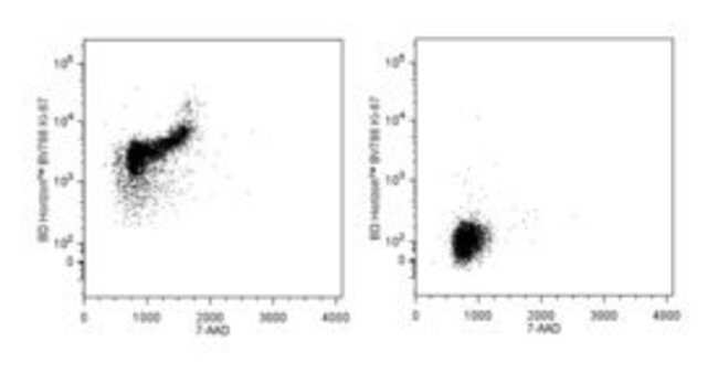 Ki-67, Mouse, Clone: B56, BV786, BD 50 Tests; BV786:Antibodies