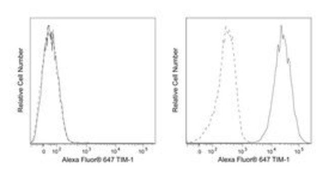 anti-TIM-1; Clone: 1D12; BD 50 Tests; Alexa Fluor 647