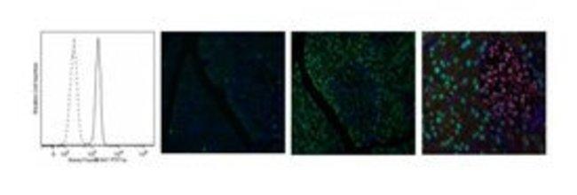 PTF1A Mouse, Alexa Fluor 647, Clone: S25-763, BD 50µg; Alexa Fluor