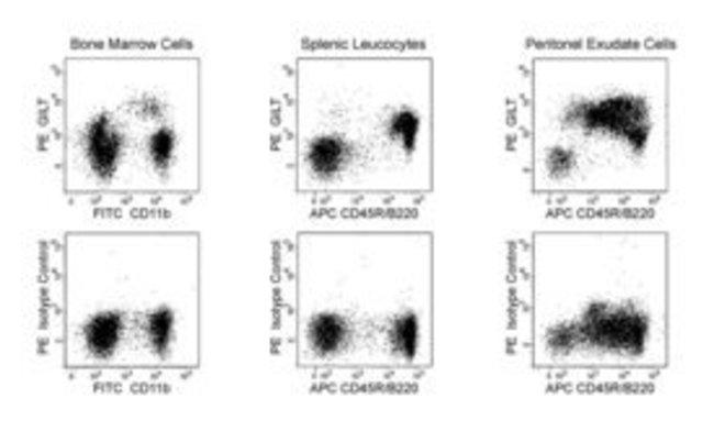 GILT Mouse anti-Mouse, PE, Clone: MaP.mGILT6, BD 50µg; PE:Life Sciences