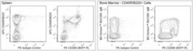 CD268 (BAFF-R) Rat anti-Mouse, PE, Clone: 7H22-E16, BD 50µg; PE:Life