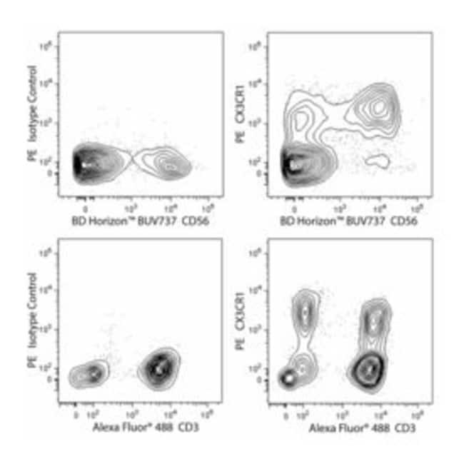 CX3CR1 Rat anti-Human, PE, Clone: 2A9-1, BD 100 Tests; PE:Antibodies