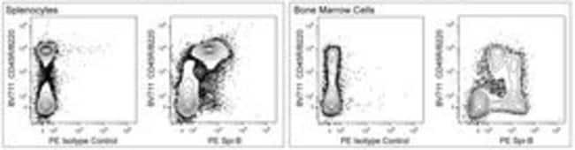 Spi-B Rat anti-Mouse, PE, Clone: U14-267, BD 50µg; PE:Life Sciences