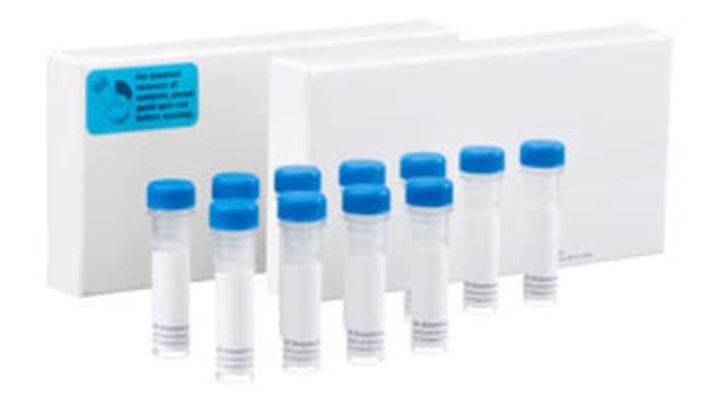 BD Zonula Adherens Sampler Kit 1 kit:Electrophoresis, Western Blotting