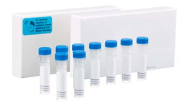 BD Bcl-2 Related Sampler Kit 1 kit:Electrophoresis, Western Blotting and