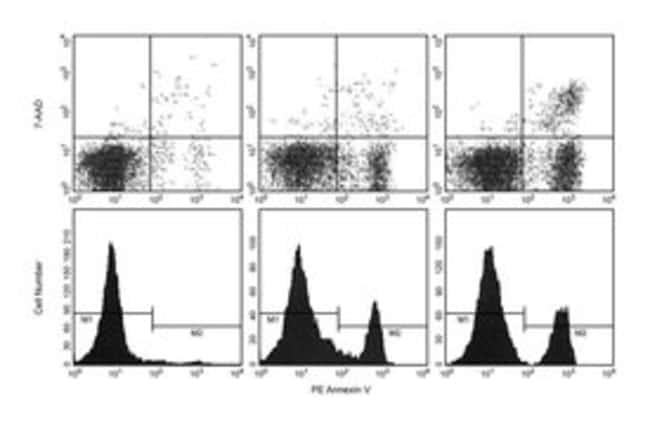 BDAnnexin V-PE Format: PE; 200 tests BDAnnexin V-PE