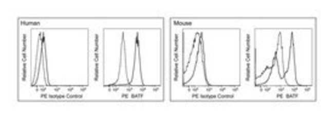 BATF Mouse, PE, Clone: S39-1060, BD 50 Tests; PE:Life Sciences
