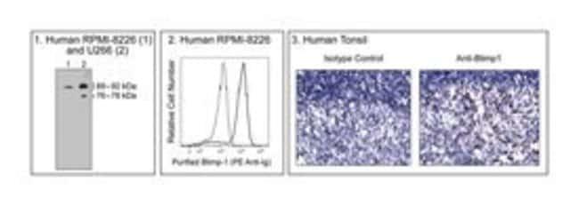 at Anti-Blimp-1 Rat, Unlabeled, Clone: 6D3, BD 0.1mg; Unlabeled:Life Sciences