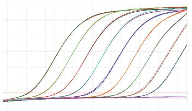 Thermo Scientific™Maxima Probe qPCR Master Mix (2X), with separate ROX vial: qPCR Master Mixes PCR Reagents and Kits