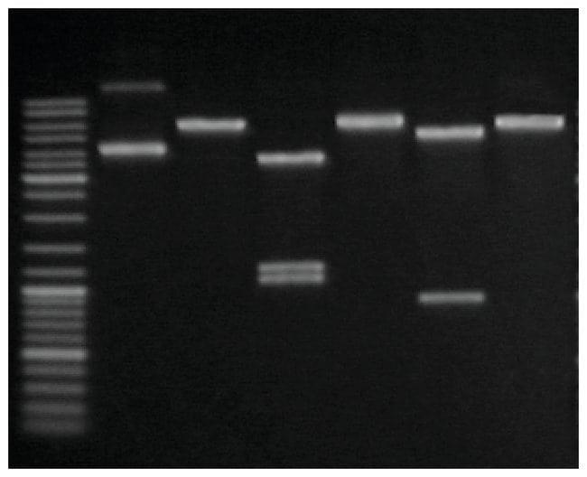 Thermo Scientific™GeneJET Plasmid Midiprep Kit