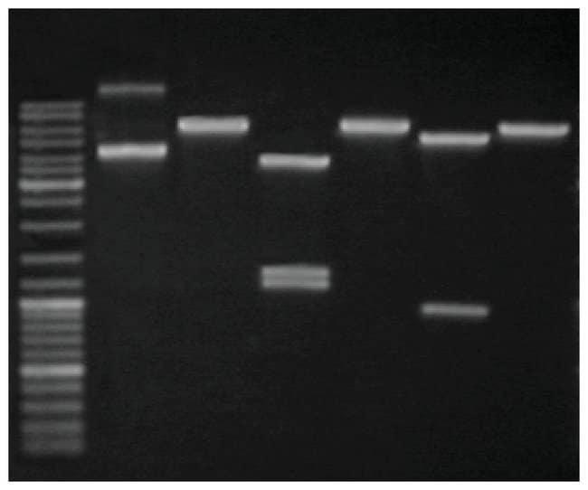 Thermo Scientific™GeneJET Plasmid Maxiprep Kit