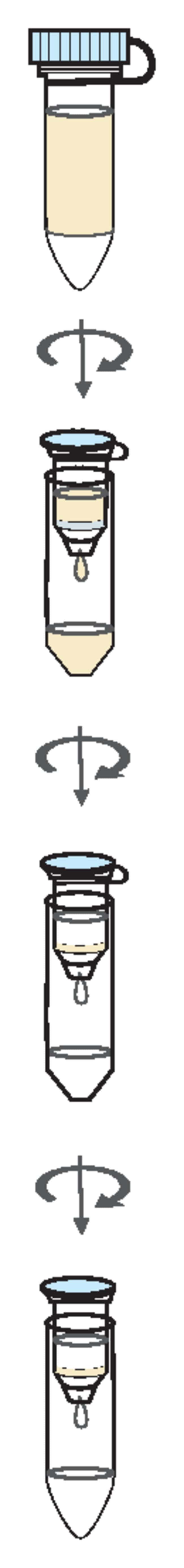 Thermo Scientific™GeneJET Plasmid Miniprep Kit: Biochemicals and Reagents Life Sciences