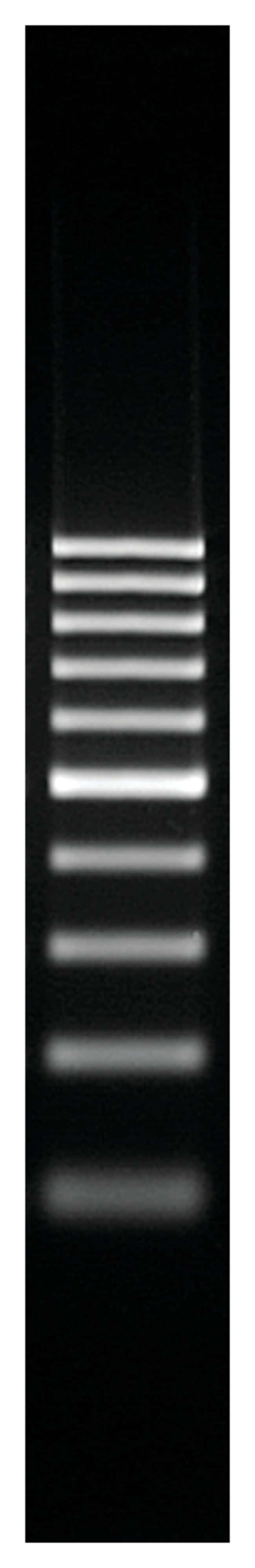 Thermo Scientific GeneRuler 100 bp DNA Ladder :Life Sciences:Biochemicals