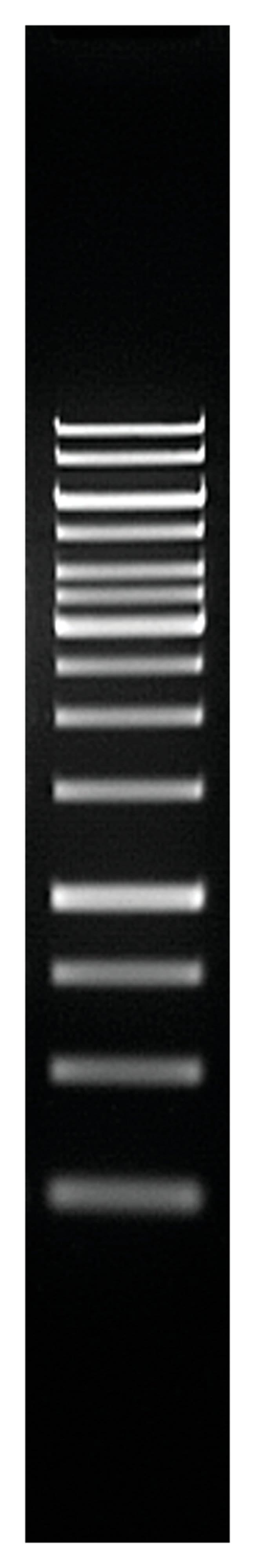 Thermo Scientific GeneRuler 1 kb DNA Ladder :Life Sciences:Biochemicals