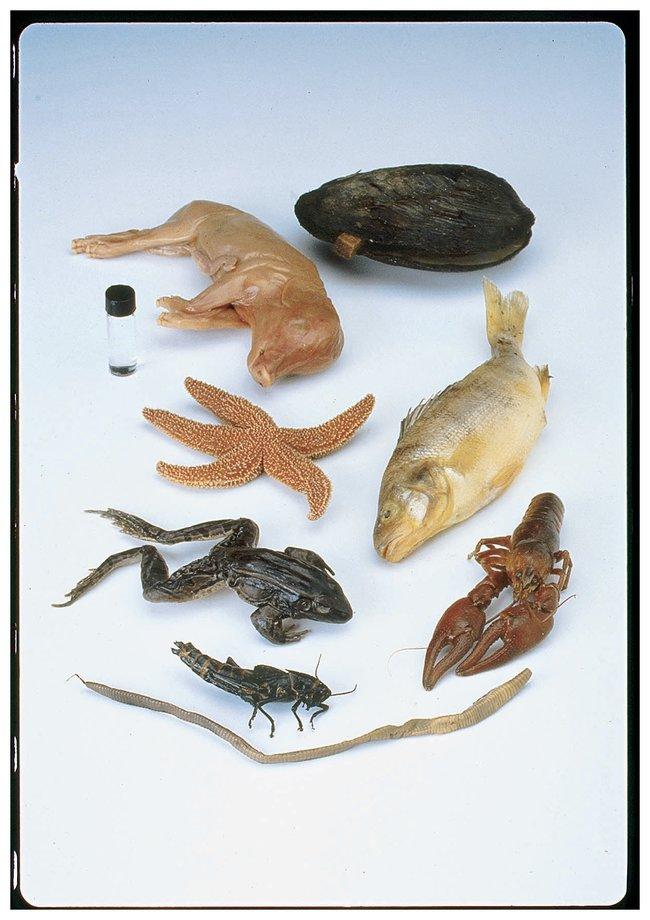 Six-, Seven- or Nine-Specimen Set :Teaching Supplies:Biology Classroom