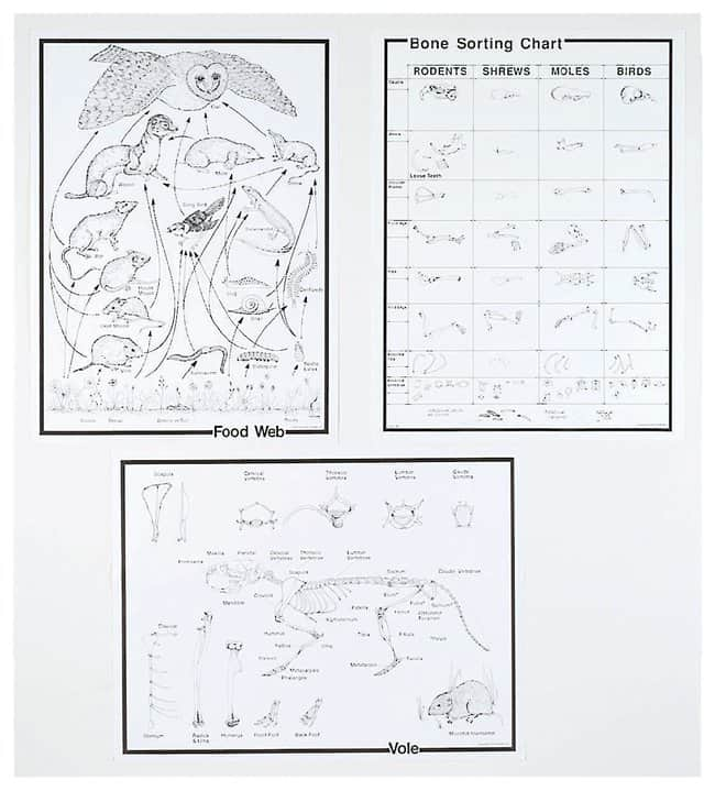 Owl Pellet Chart Set  Owl Pellet Chart; Set of 8:Teaching Supplies