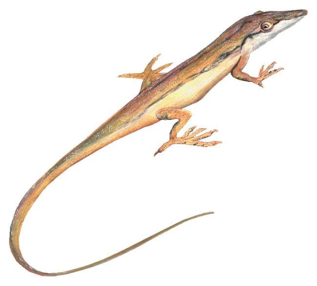 Fisher Science Education Preserved Specimens: Vertebrata, Reptilia Squamata,