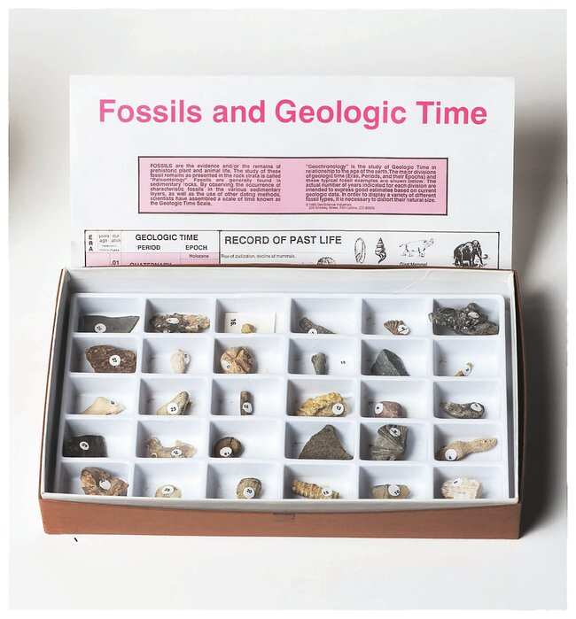 American Educational Products Advanced Fossil Collection 30 specimens; Grades 6-12 Classroom Geology