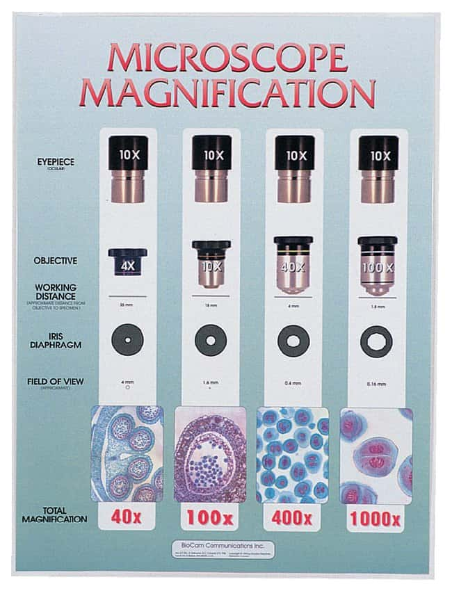 Microscope Magnification Chart Laminated; 18 x 24 in. (45 ...