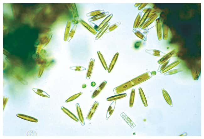 Exploring with a Microscope :Teaching Supplies:Biology Classroom