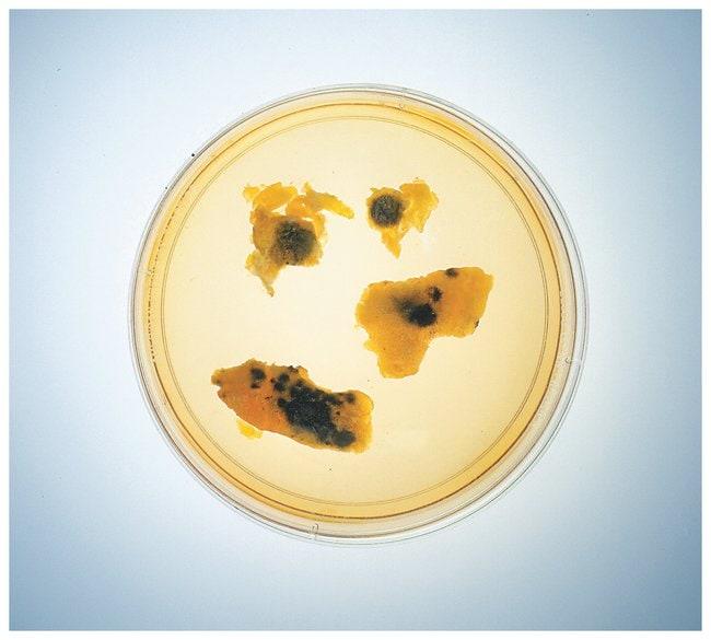 Microbe Scavenger Hunt