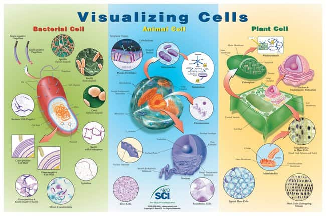 Visualizing Cells Poster :Teaching Supplies:Classroom Safety